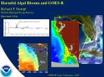 Harmful Algal Blooms and GOES-R