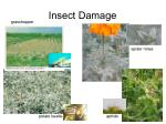 Insect Damage