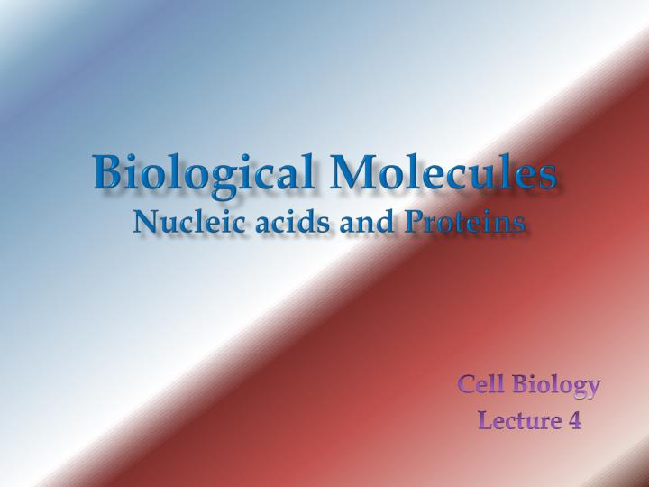 biological molecules nucleic acids and proteins n.