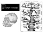 IB Biology Option D D3 Human Evolution