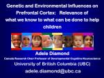 Genetic and Environmental Influences on Prefrontal Cortex: Relevance of
