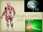 MUSCLES, BONES,  And Joints