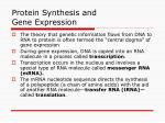Protein Synthesis and Gene Expression
