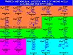 PROTEIN METABOLISM: SPECIFIC WAYS OF AMINO ACIDS CATABOLISM AND SYNTHESIS