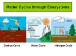 Matter Cycles through Ecosystems