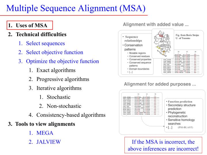 multiple sequence alignment msa n.