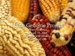 Maize Genome Project