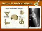 Joints & Articulations