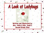A Look at Ladybugs