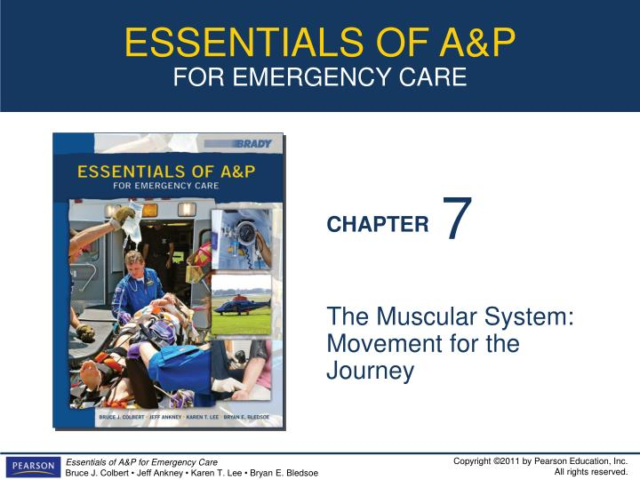 the muscular system movement for the journey n.