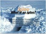 What is an igloo?