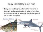 Bony vs Cartilaginous Fish