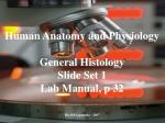 Human Anatomy and Physiology General Histology Slide Set 1 Lab Manual, p 32