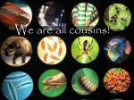 We are all cousins!