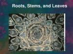 Roots, Stems, and Leaves