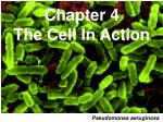 Chapter 4 The Cell In Action