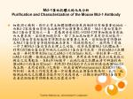 Mcl-1蛋白抗體之純化及分析 Purification and Characterization of the Mouse Mcl-1 Antibody