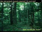Are old-growth forests special? Or just old?