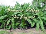 Banana Village The Legend