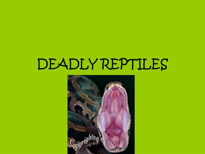 deadly reptiles n.