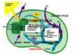 Photosynthesis Analogy