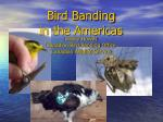 Bird Banding  in the Americas