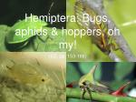 Hemiptera: Bugs, aphids & hoppers, oh my!