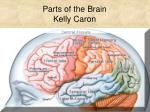 Parts of the Brain  Kelly Caron