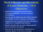 Week 8 Muscles and Movements of Lower Extremity – Ch 8 Objectives
