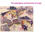 The phylogeny and diversity of frogs