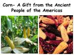 Corn- A Gift from the Ancient People of the Americas