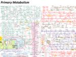 Primary Metabolism