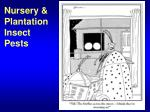 Nursery & Plantation Insect Pests