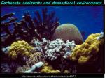Carbonate sediments and depositional environments