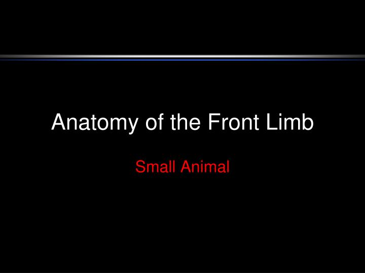 anatomy of the front limb n.