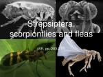 Strepsiptera, scorpionflies and fleas