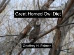 Great Horned Owl Diet