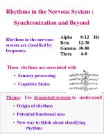 Rhythms in the Nervous System : Synchronization and Beyond