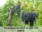 The process by which we bear fruit (part 2)