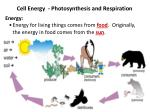 Cell Energy   -  Photosynthesis  and  Respiration Energy: