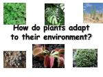 How do plants adapt to their environment?