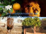 The vital funtions of the Lion and the orange tree