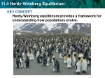 Hardy-Weinberg equilibrium describes populations that are not evolving.